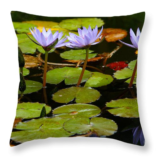Pond Throw Pillow featuring the photograph Waterlilies by Gaspar Avila