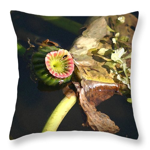 Waterlily Throw Pillow featuring the photograph Waterlily by Mary Haber