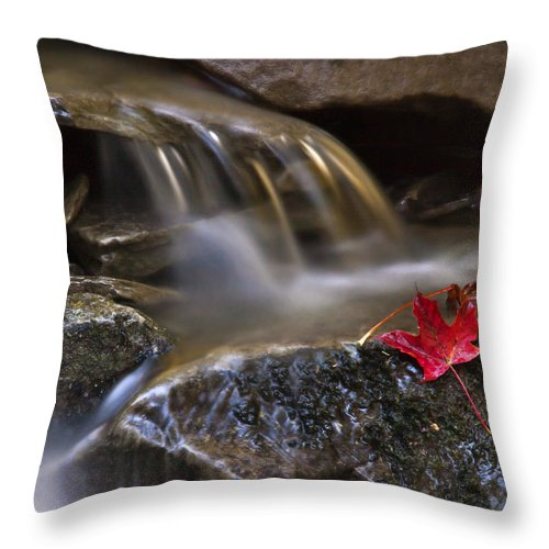 Fall Throw Pillow featuring the photograph Watermark by Evelina Kremsdorf
