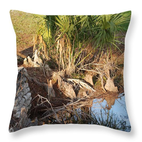 Roots Throw Pillow featuring the photograph Waters Edge by Rob Hans
