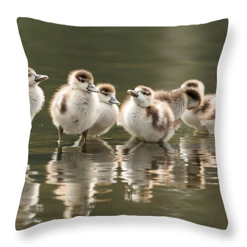 5fe5d1c5cdce Gosling Throw Pillow featuring the photograph We Are Family - Seven Egytean  Goslings In A Row