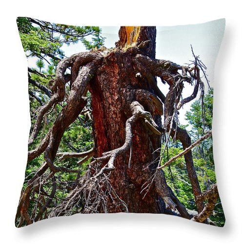 Tree Throw Pillow featuring the photograph Weather Beaten by Diana Hatcher