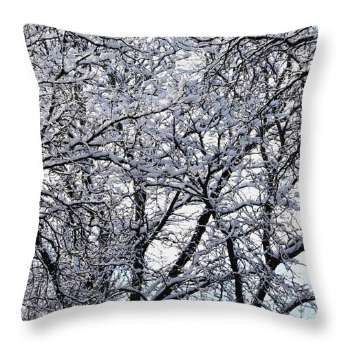 Maple Tree Throw Pillow featuring the photograph Weather Patterns by Richard Andrews