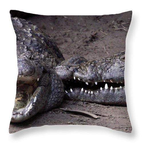 Crocodiles Throw Pillow featuring the photograph Welcome Come On In by Mary Haber