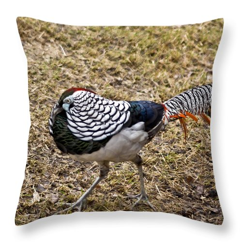 Black Throw Pillow featuring the photograph Well Plumed Bird by Douglas Barnett