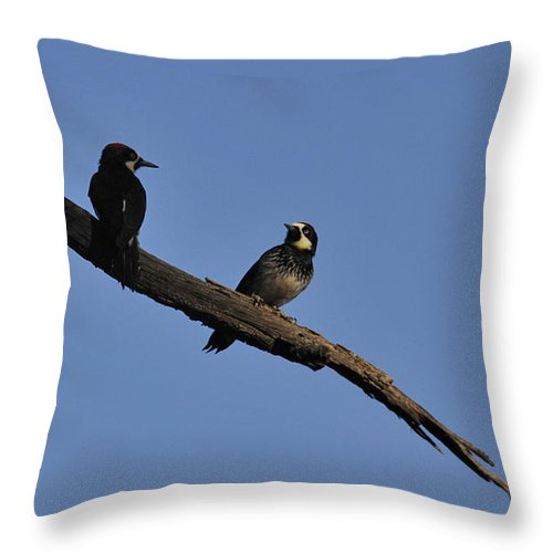 Birds Throw Pillow featuring the photograph Western Woodpeckers by David Arment