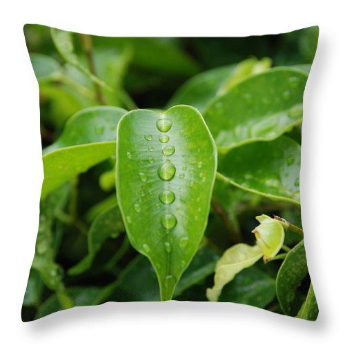 Macro Throw Pillow featuring the photograph Wet Bushes by Rob Hans