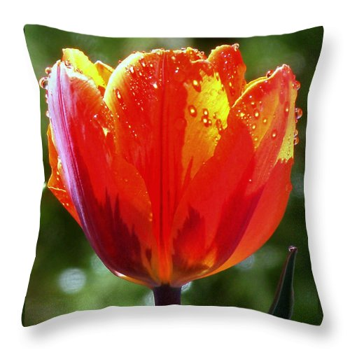 Tulip Throw Pillow featuring the photograph Wet Tulip by Rona Black