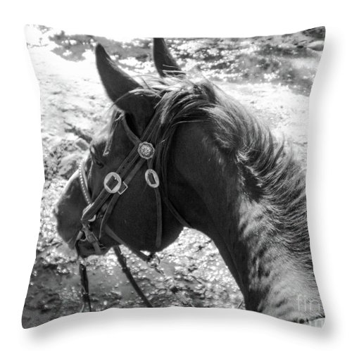 Horse Throw Pillow featuring the photograph Wettin' The Whistle by Katie Brown