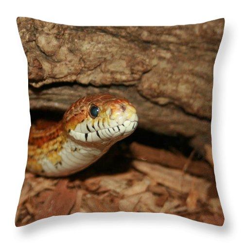 Snake Throw Pillow featuring the photograph Whaaaaatz Up by David Dunham