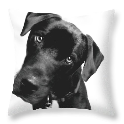 Labrador Throw Pillow featuring the photograph What by Amanda Barcon