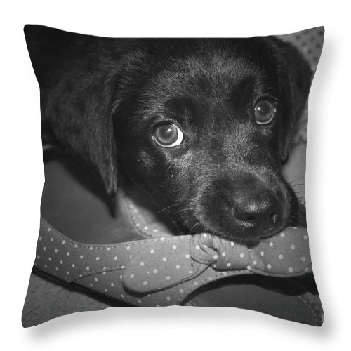 Black And White Throw Pillow featuring the photograph What Shoe by Cathy Beharriell