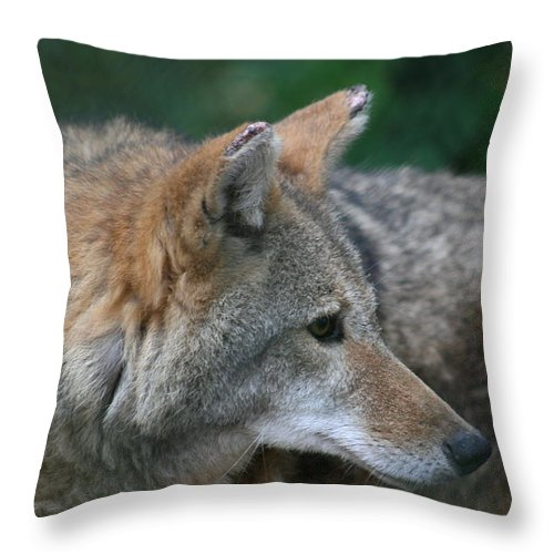 Coyote Throw Pillow featuring the photograph What Was That Sound by David Dunham