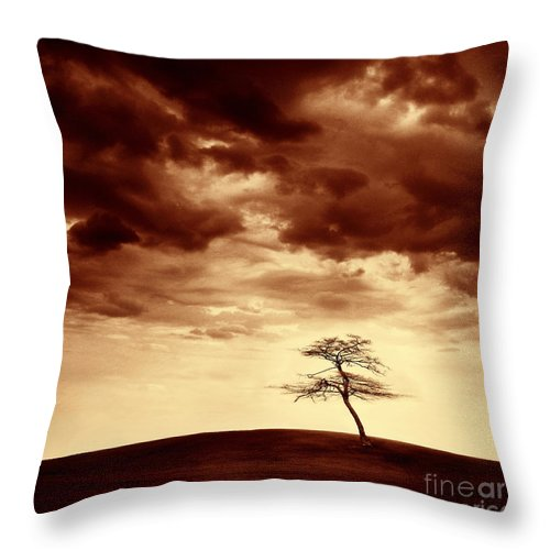 Tree Throw Pillow featuring the photograph What Will Be The Legacy by Dana DiPasquale