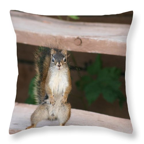 Squirrel Mother Nature Wild Animal Cute Dancing Throw Pillow featuring the photograph What You Lookin At by Andrea Lawrence