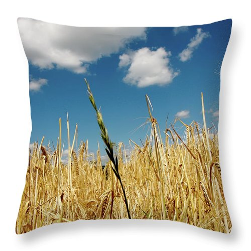 Rudesheim Throw Pillow featuring the photograph Wheat On The Rhine by KG Thienemann