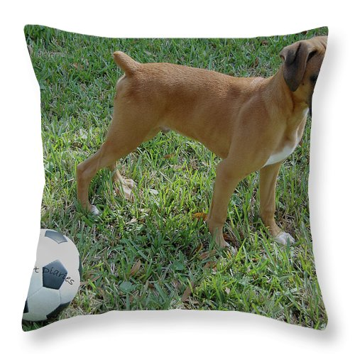 Dog Throw Pillow featuring the digital art When I Was Just A Pup by DigiArt Diaries by Vicky B Fuller