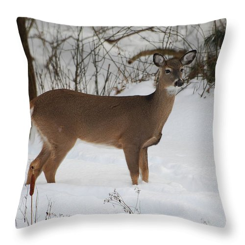 Deer Throw Pillow featuring the photograph Where Is Everybody by Lori Tambakis