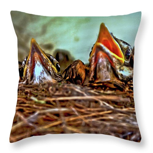 Baby Throw Pillow featuring the photograph Where's Mom I'm Hungry by David Kehrli