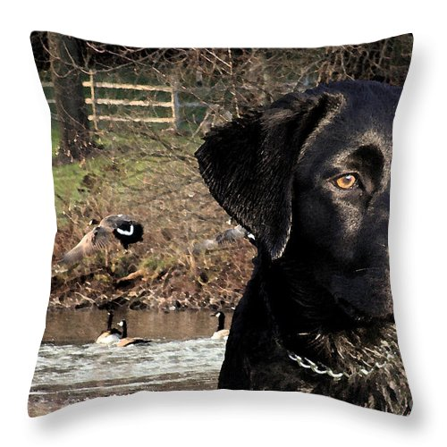 Black Throw Pillow featuring the photograph Where's The Geese Labrador 4 by Cathy Beharriell