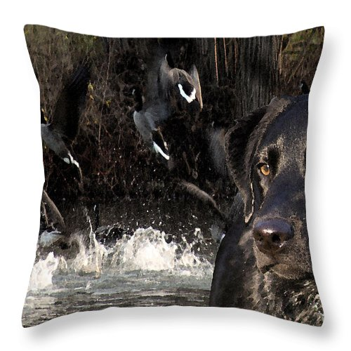 Black Throw Pillow featuring the photograph Where's The Geese Labrador 6 by Cathy Beharriell