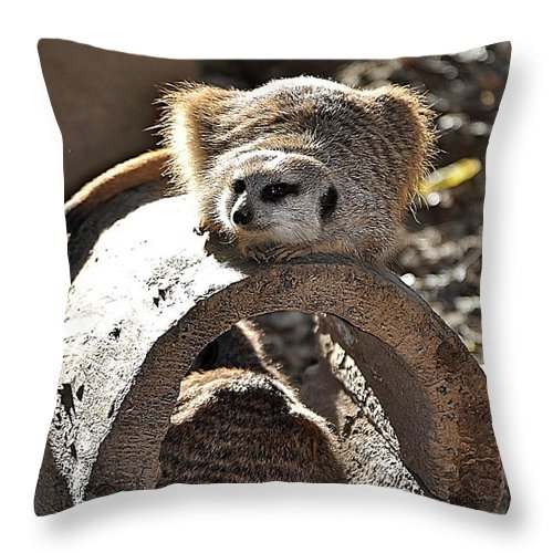 Animals Throw Pillow featuring the photograph Which Way Did He Go by Jan Amiss Photography