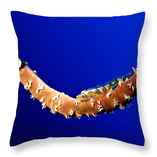 Afrika Throw Pillow featuring the photograph Whip Coral Gobi by Joerg Lingnau