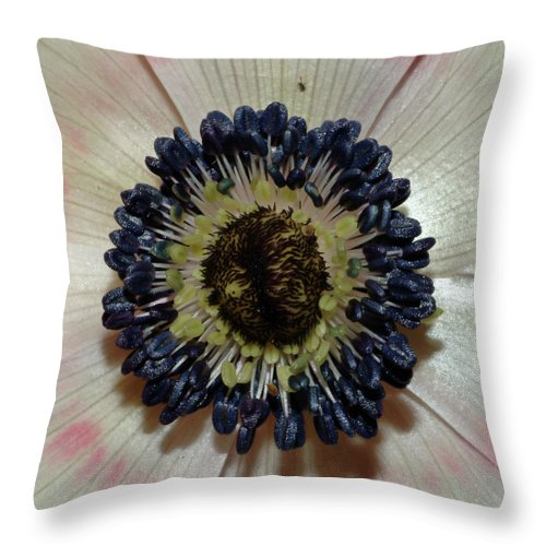 White Anemone Throw Pillow featuring the photograph White Anemone by Robert Shard