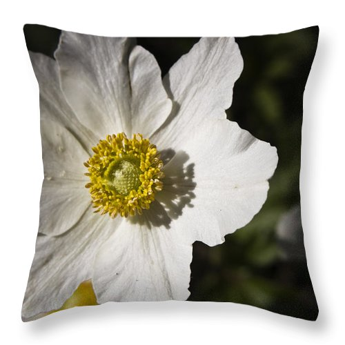 Flower Throw Pillow featuring the photograph White Anemone by Teresa Mucha