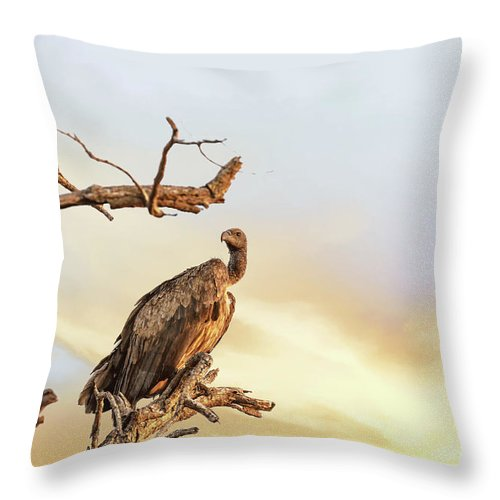 Vulture Throw Pillow featuring the photograph White-backed Vulture by Jane Rix