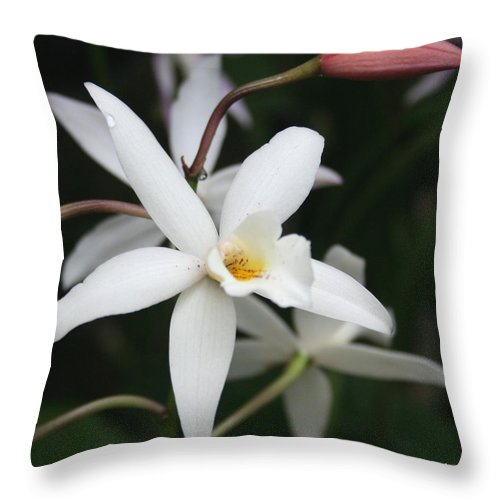 Flowers Nature White Macro Orchid Greenhouse Digital Photography Throw Pillow featuring the photograph White Beauty Dove by Linda Sannuti