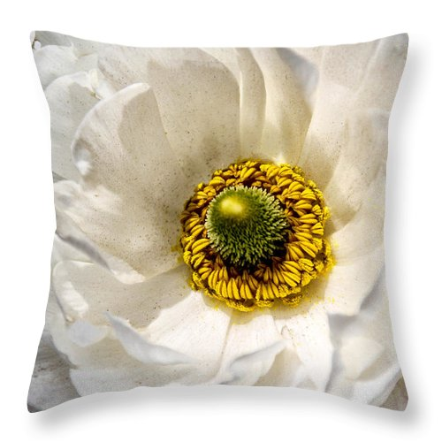 White Flower Throw Pillow featuring the photograph White Beauty by Mary Ourada
