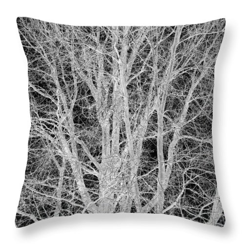 Tree Throw Pillow featuring the digital art White Branches by Munir Alawi