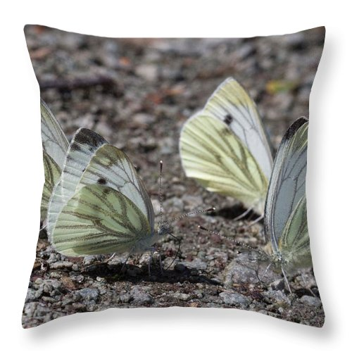 Butterfly Throw Pillow featuring the photograph White Butterflies by Bob Kemp