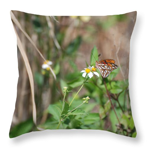 Butterfly Throw Pillow featuring the photograph White Butterfly by Rob Hans