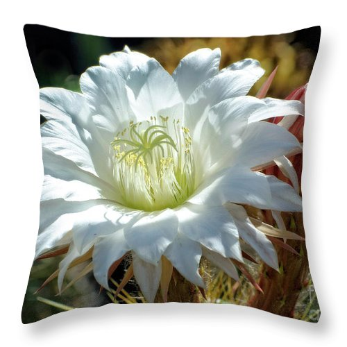 Cactus Throw Pillow featuring the photograph White Cactus Flower by Jim And Emily Bush