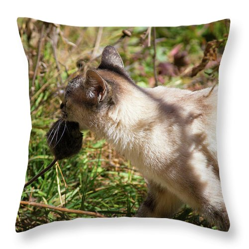 White Cat Throw Pillow featuring the photograph White Cat On The Hunt by Seb Estrada
