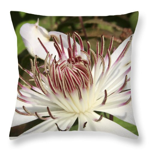 Clematis Throw Pillow featuring the photograph White Clematis Henryi by Margie Wildblood