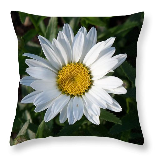 Flower Throw Pillow featuring the photograph White Daisy by Corinne Elizabeth Cowherd