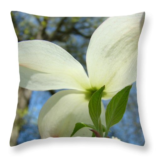 Giclee Art Print Throw Pillow featuring the photograph White Dogwood Flower Art Prints Blue Sky Baslee Troutman by Baslee Troutman