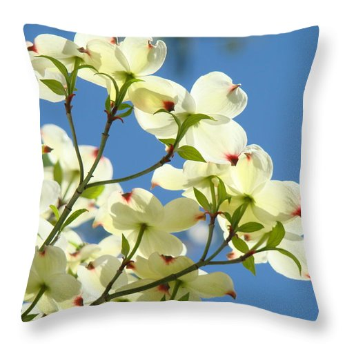 Dogwood Throw Pillow featuring the photograph White Dogwood Flowers 1 Blue Sky Landscape Artwork Dogwood Tree Art Prints Canvas Framed by Baslee Troutman
