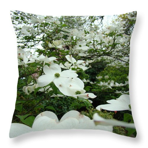 Dogwood Throw Pillow featuring the photograph White Dogwood Flowers 6 Dogwood Tree Flowers Art Prints Baslee Troutman by Baslee Troutman