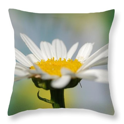 Flower Throw Pillow featuring the photograph White Flower by Catherine Lau