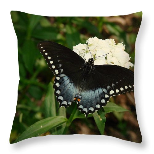 Nature Throw Pillow featuring the photograph White Flowered Butterfly by Mary Halpin