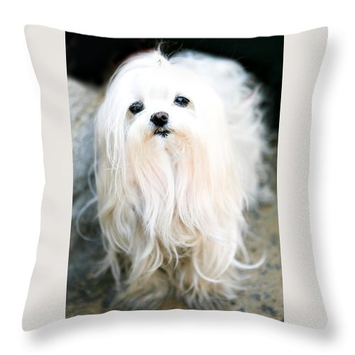 Small Throw Pillow featuring the photograph White Fluff by Marilyn Hunt