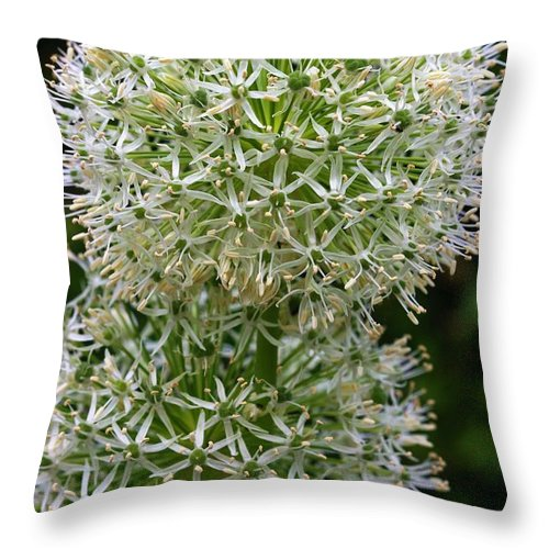 Flower Throw Pillow featuring the photograph White Globe Thistle 2 by Kristina Jones