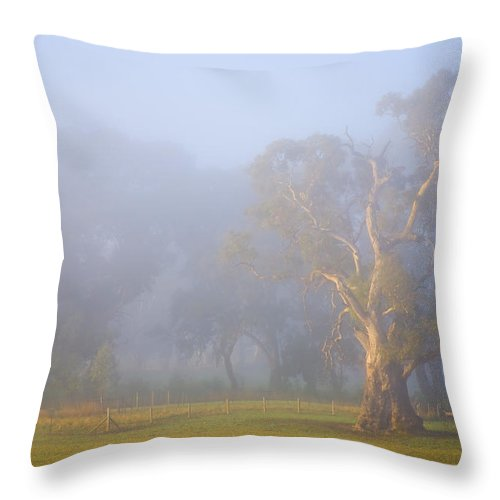 Tree Throw Pillow featuring the photograph White Gum Morning by Mike Dawson