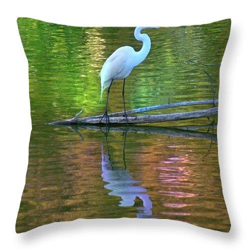 Bird Throw Pillow featuring the photograph White Heron by Greg Hammond