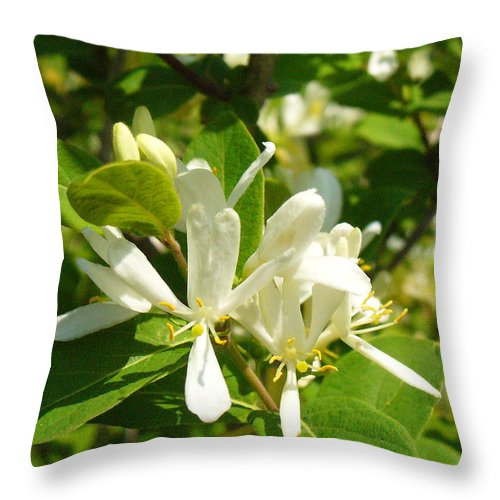 Nature Throw Pillow featuring the photograph White Honeysuckle Blossoms by Peggy King
