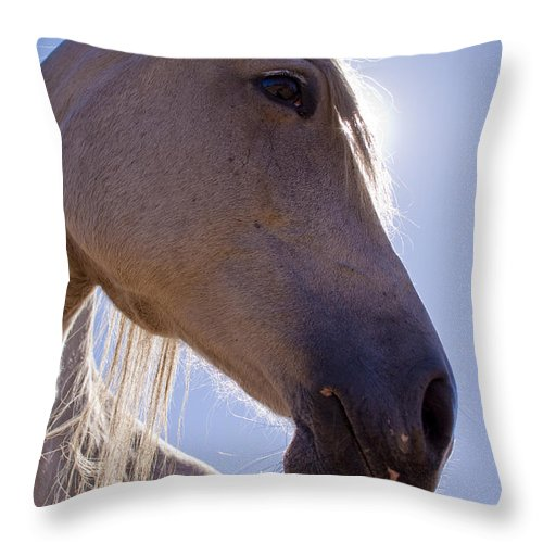 White Throw Pillow featuring the photograph White Horse by Dustin K Ryan